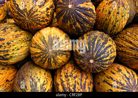 Cantaloupe melone (Cucumis melo var. cantalupensis), mature fruits, Turkey, Antalya