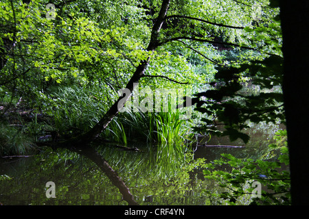 pond, reflections in the water, Germany, North Rhine-Westphalia, Ruhr Area, Witten - Stock Photo