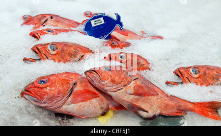 Pacific red snapper on ice in the market - Stock Photo