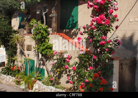flowers in front of stairs on island Sainte Marguerite, France, Cannes - Stock Photo