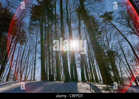 Sun shining through snowy forest - Stock Photo