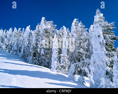 Snow covered trees. Mt. Rainier National Park, Washington - Stock Photo