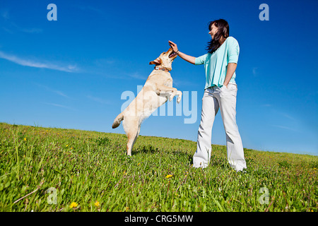 trainer teaching dog to jump up - Stock Photo