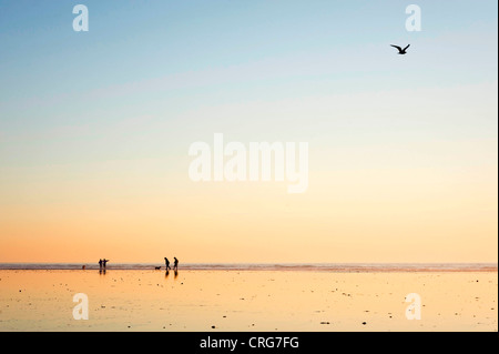 Silhouetted figures walk their dog on wet sand beside the ocean at sunset. - Stock Photo