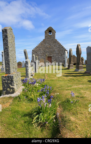 Old St Mary's church and gravestones with bluebells in churchyard at Burwick South Ronaldsay Orkney Isles Scotland - Stock Photo