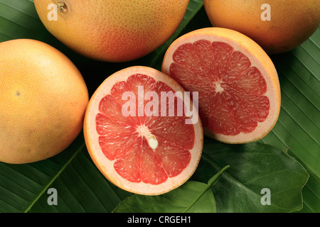 Ripe red grapefruits, whole and cut, on the palm leaf - Stock Photo