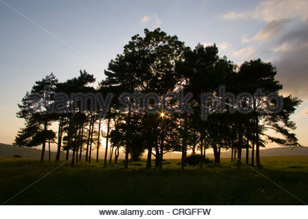 The Baden-Powell tree copse, Rodborough Common, near Stroud in Gloucestershire, UK. - Stock Photo