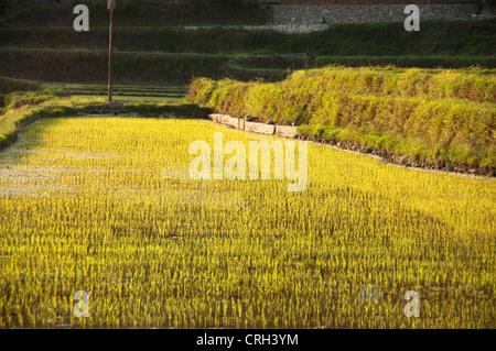 Terraced rice field, Xijiang Miao village, China - Stock Photo