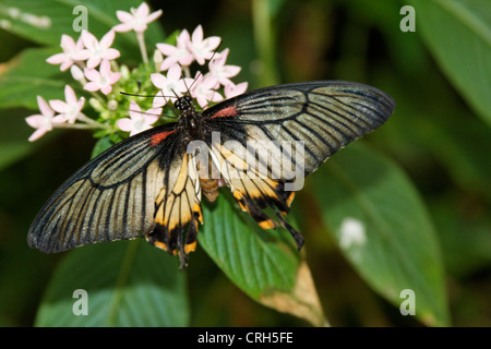 Schmetterlinge in der Natur - butterfly in nature Schmetterling - Butterfly - Stock Photo