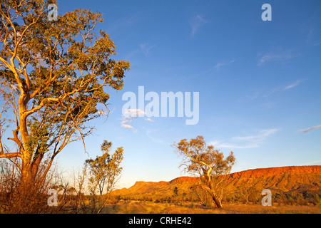 Ghost gums and the Heavitree Range, in the West MacDonnell Ranges outside of Alice Springs - Stock Photo