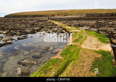 Seaweed covered causeway to Brough of Birsay historic site with people walking across to tidal island at low tide - Stock Photo