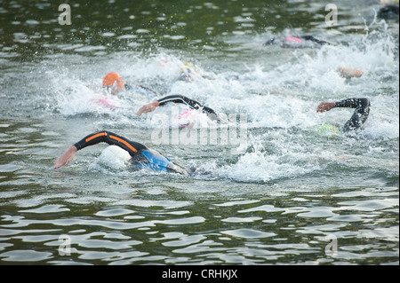 Female Swimmers Training In An Open Air Olympic Swimming Pool Stock Photo Royalty Free Image