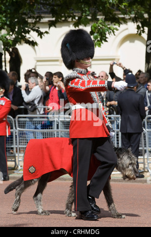 Conmael the Irish Wolfhound mascot of the Irish Guards with his handler marching down the mall Trooping the Colour - Stock Photo