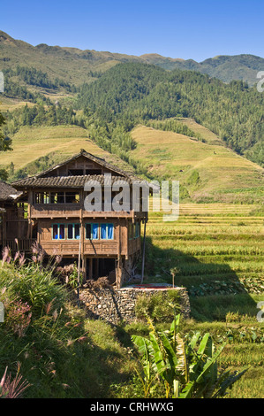 Traditional wood house and the rice terraces of Longsheng - Longji village -  Guangxi province - China - Stock Photo