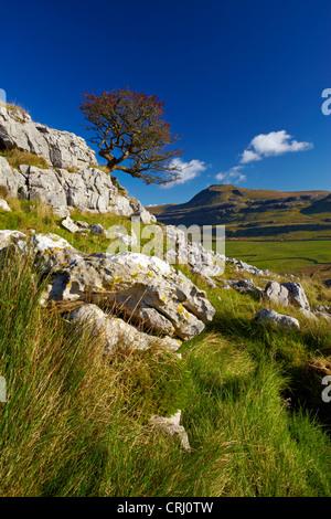 Ingleborough, one of Yorkshire's famous three peaks, seen from the limestone slopes of Twistleton Scar. - Stock Photo