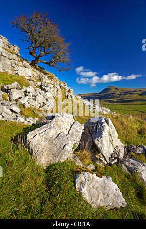 Ingleborough, one of Yorkshire's famous three peaks, seen from the slopes of Twistleton Scar. - Stock Photo