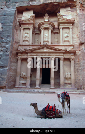 Bactrian camel, two-humped camel (Camelus bactrianus), two camels in front of the rock cut tomb called 'treasury' - Stock Photo