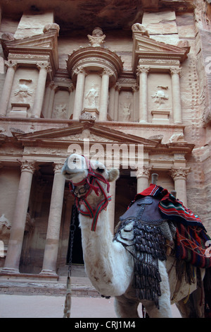 Bactrian camel, two-humped camel (Camelus bactrianus), camel in front of the rock cut tomb called 'treasury' of - Stock Photo