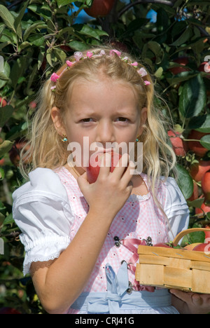 little girl reaping apples and biting in one of it - Stock Photo