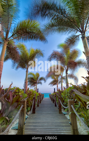 Pathway and palm trees blowing in breeze. Providenciales. Turks and Caicos. - Stock Photo