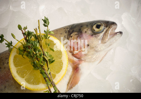 Close up of fresh fish on a bed of ice. - Stock Photo