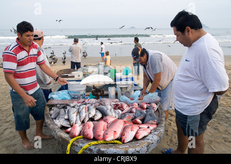 Mexican fishermen processing and selling their morning catch right on the beach. - Stock Photo