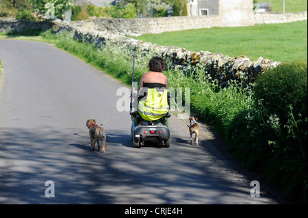 A lady rides a mobility scooter while taking two small dogs for a walk down a country lane - Stock Photo