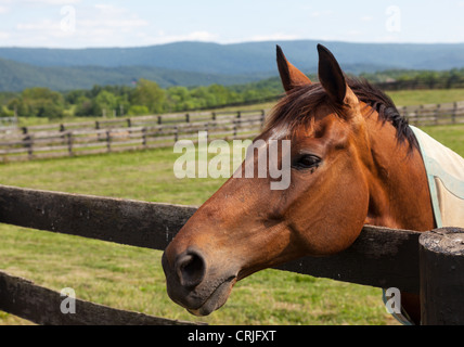 Head of an old brown horse in meadow leaning on a wooden fence with hills in background - Stock Photo