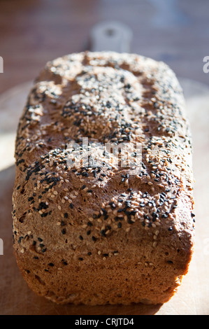 A freshly baked loaf of healthy brown bread covered with sesame seeds, on a wooden bread board in sunlight. - Stock Photo