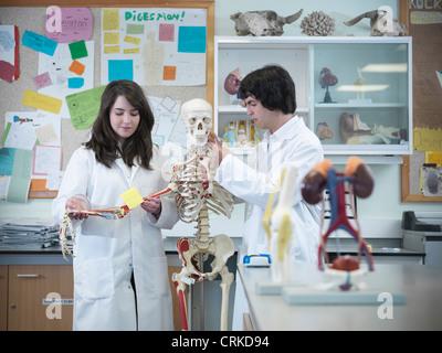 Biology students studying skeleton - Stock Photo