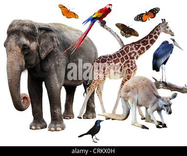 Collage Of Animals Images On White Background - Stock Photo