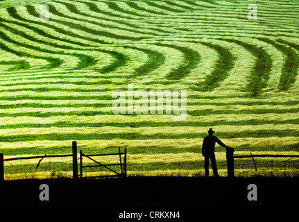 Farmer surveys newly mown hay in farm field as the late afternoon sun shines on work well done, Midwest USA - Stock Photo