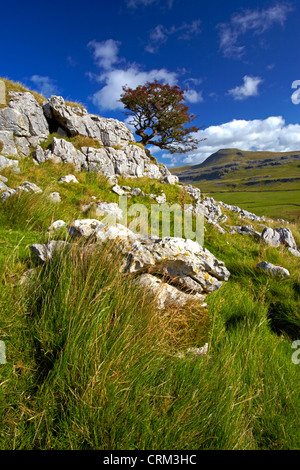 Ingleborough, one of Yorkshire's famous three peaks, seen from the slopes of Twistleton Scar - Stock Photo