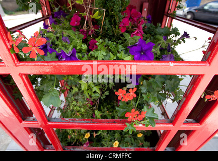 Red telephone boxes converted to flower boxes in Archway, London - Stock Photo