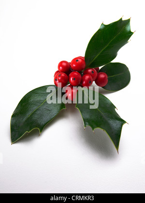 A piece of holly with red berries - Stock Photo