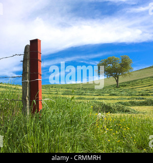 Fence and tree in a mowed field. Limagne. Auvergne. France. Europe. - Stock Photo