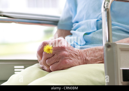 Senior Woman Sitting in a Wheelchair Holding a Flower - Stock Photo