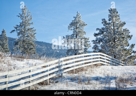 White fence in a field with frosty trees, Vernon, British Columbia, Canada. - Stock Photo