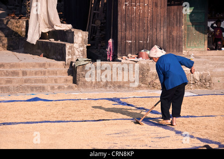 Rice harvest in a Dong village - Zhaoxing, Guizhou province (China) - Stock Photo