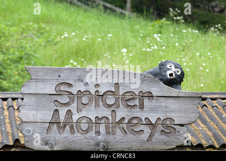 Spider monkey wooden Sign with model of A Spider monkey on it - Stock Photo
