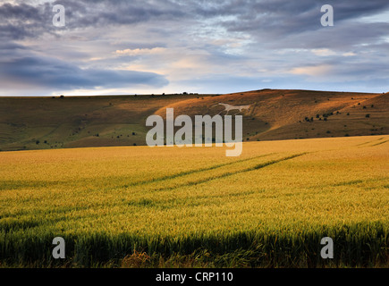 The Alton Barnes white horse on Milk Hill looking out over Pewsey Vale. - Stock Photo