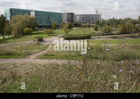 View of ecology park and buildings, The Ecology Park, Mile End Park, Tower Hamlets, London, England, september - Stock Photo