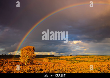 Rainbow over heathland at Mogshade Hill in the New Forest National Park. - Stock Photo