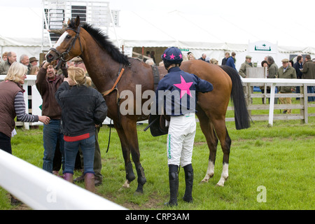 Groom removing a race horses tong tie after a horse race in England - Stock Photo