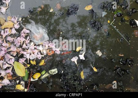 water pollution closeup in Bangkok canals, Thailand - Stock Photo