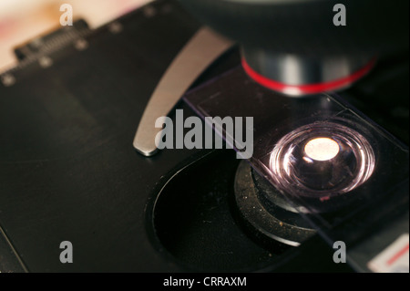 Cytology slide on the stage of a microscope. - Stock Photo