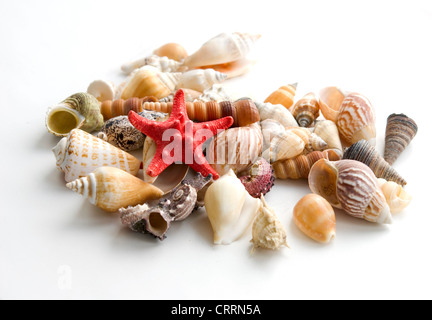 sea cockleshells on a white background - Stock Photo