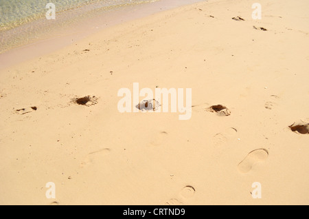 footprints in wet sand - Stock Photo
