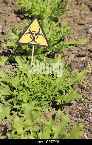 warnig EHEC on salad - Stock Photo