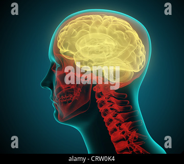 Stylized Medical illustration of a humand head - Stock Photo